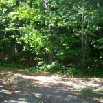 Driveway and forest behind the cottage. Long, private laneway for strolls.